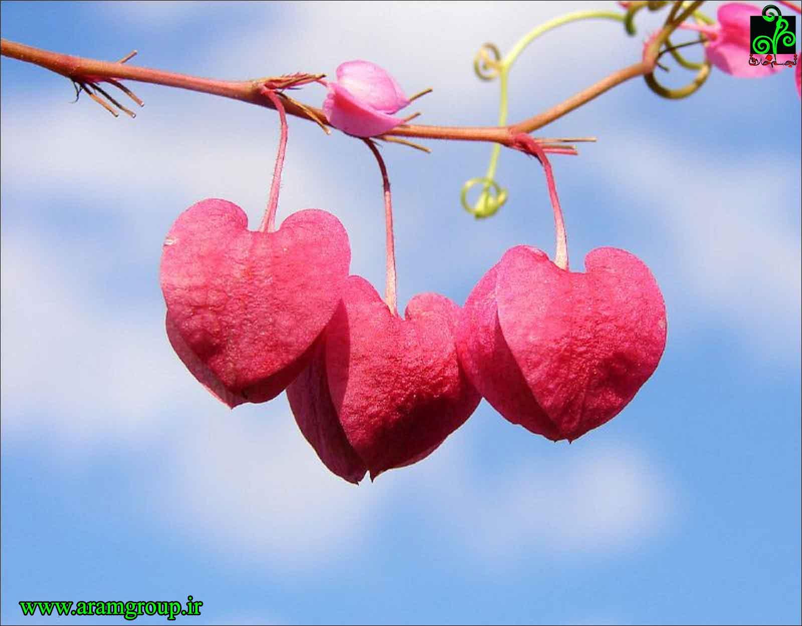 عشق-دکترآرام-تجسم خلاق