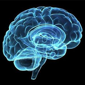 آموزش حافظه فعال